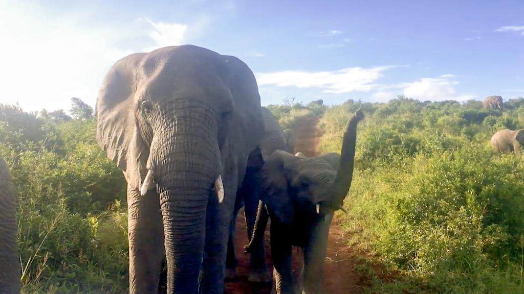 Elefantensafari in Südafrika